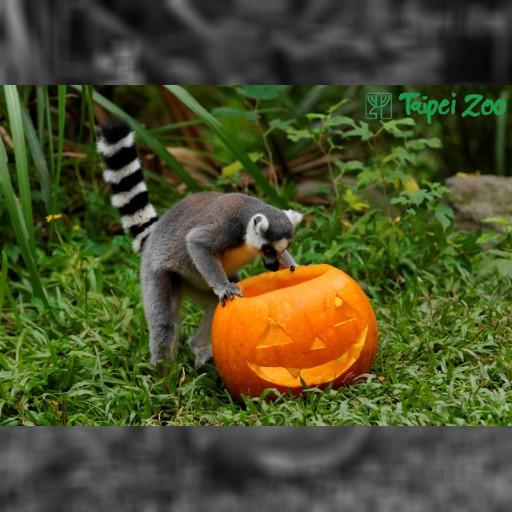 台北動物園がハロウィンで特別メニュー