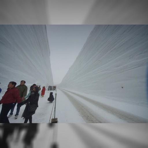 先日、阿里山鉄道と黒部のトロッコ列車が姉妹提携をしましたが、雪の壁が見頃です。