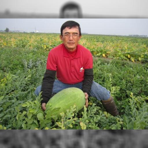 台湾・屏東のスイカは今が旬 果肉ぎっしりでジューシー | 経済 | 中央社フォーカス台湾
