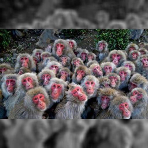 冷翻啦!500隻猴抱抱取暖 超壯觀 | 即時新聞 | 20141204 | 蘋果日報