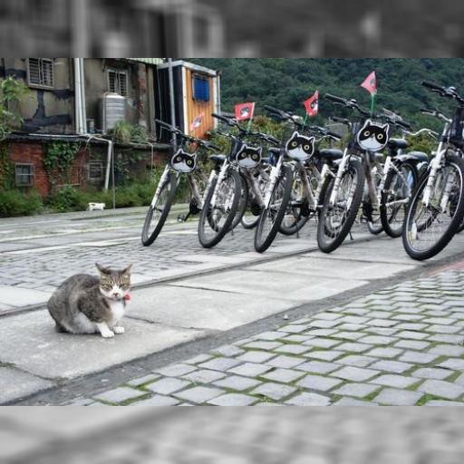 台湾訪問経験のない村上春樹「猫村にはぜひ一度行ってみたい」 | 社会 | 中央社フォーカス台湾