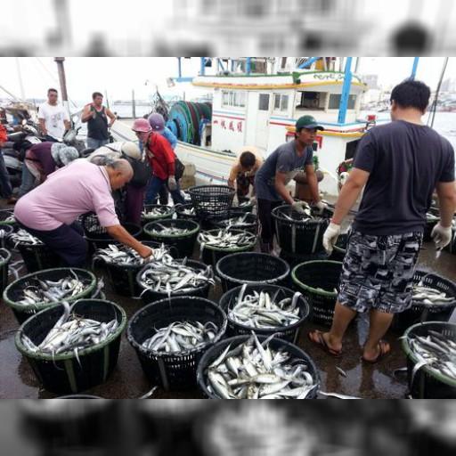 離島・澎湖で旬の海鮮の水揚げ続々 埠頭は買い物客で賑わう/台湾 | 社会 | 中央社フォーカス台湾