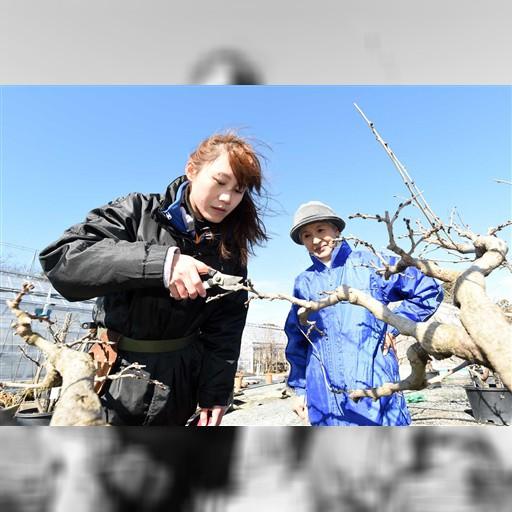 「台湾一のフジ名人に」 フラワーパークで研修中|静岡新聞アットエス