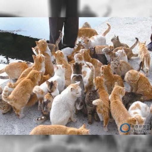「貓奴絕不能錯過的地方!」 精選日本12座必去貓島 | ETtoday 東森新聞雲