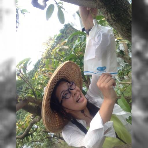 台湾ダフ~ル♪(Taiwanderful)前編。台南でのマンゴー狩り体験 – たび 珍国の女王 度々世界旅 – ファンファン福岡