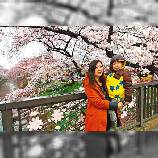 部落夯客:轉戰名古屋 賞滿開櫻花 | 即時新聞 | 20170323 | 蘋果日報