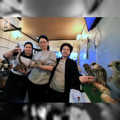 征選遊:名古屋貓頭鷹同你歎咖啡