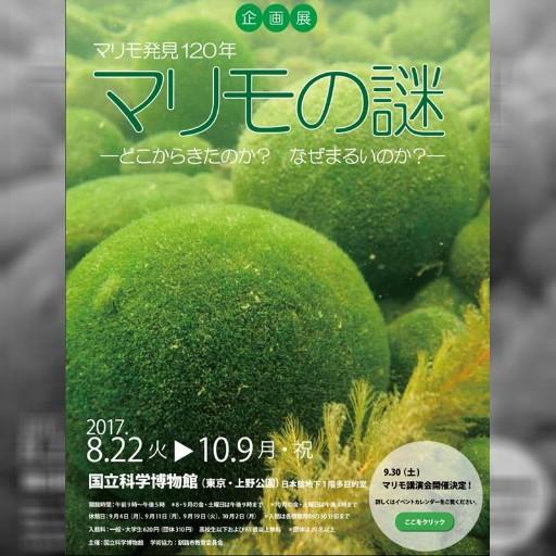 日本北海道毬藻 訂12月來台展示 | 文化 | 中央社即時新聞 CNA NEWS