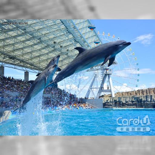 暢遊名古屋港水族館 海豚虎鯨跳躍秀才藝