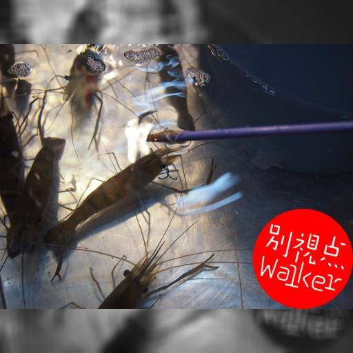 台湾の夜市でエビを釣ろう