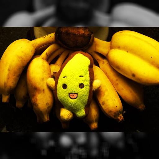 台湾バナナの危機を救え! | 加藤秀彦 公式サイト