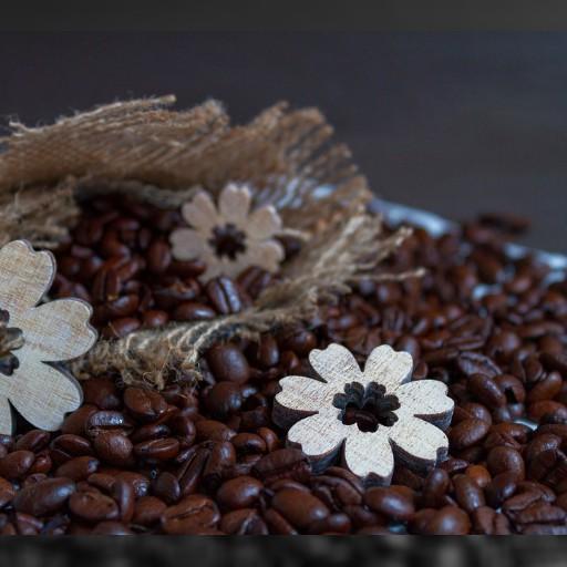 花蓮縣・舞鶴の台湾コーヒー物語 | 加藤秀彦 公式サイト
